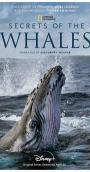Secrets of the Whales (2021)